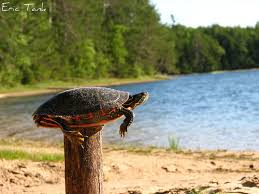 Turtle on a post